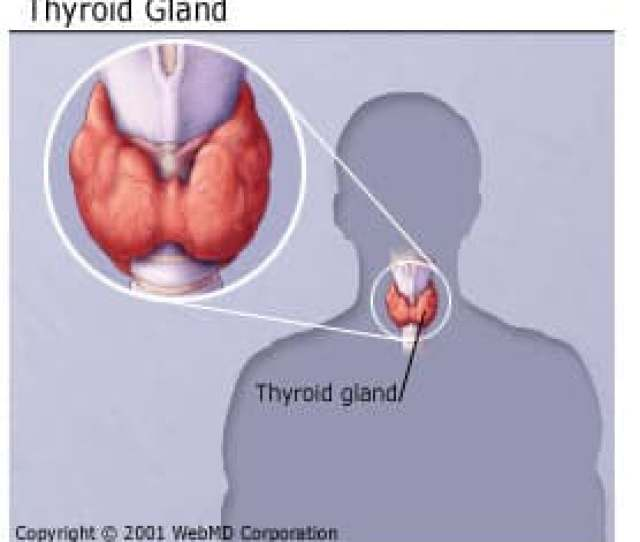 Thyroid Disorders Can Range From A Small Harmless Goiter Enlarged Gland That Needs No