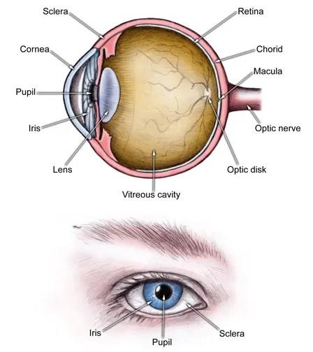 human eye diagram simple evinrude etec 90 wiring 9s imixeasy de fmp yogaundstille u2022 rh quiz makeup