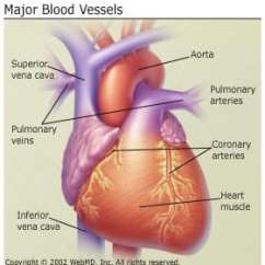 Heart Diagram Inside Lucas Voltage Regulator Wiring Anatomy And Circulation Of The Where Is Your What Does It Look Like