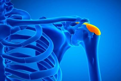 illustration of shoulder bursa