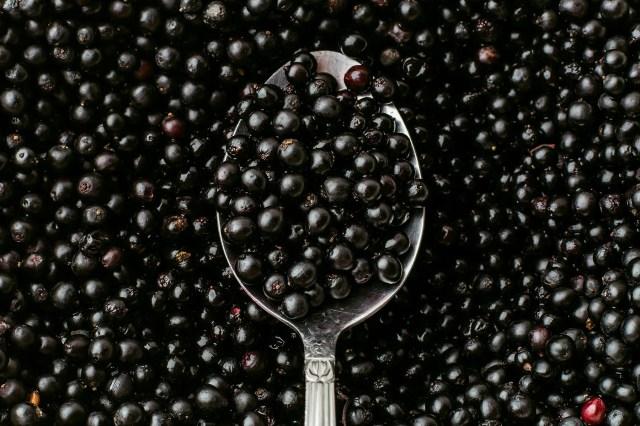 photo of elderberries