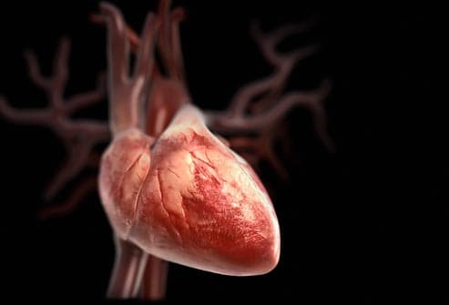 biomedical illustration of heart