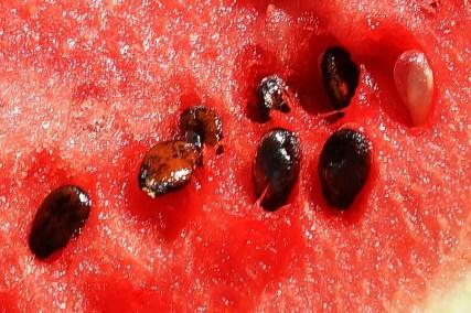 watermelon seeds close up