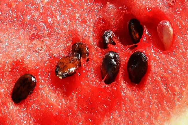 watermelon seeds close up