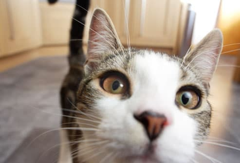 Cat Health Center   Cat Care and Information from WebMD