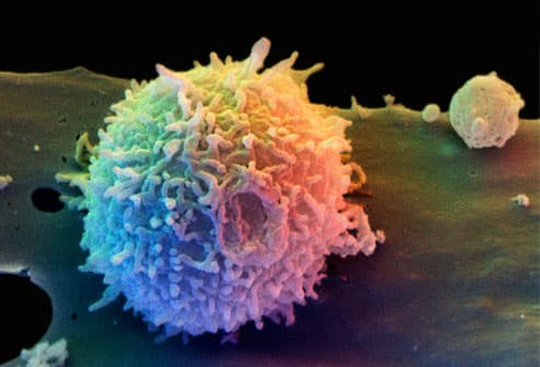T Cell Resting on a Dendritic Cell