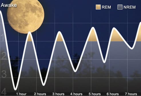 Graph of Normal Sleep Cycle