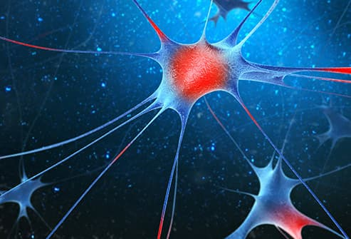 nerve cells illustration