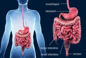 Crohn's Disease Slideshow: Symptoms, Causes, and Treatments