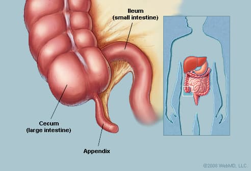 Image result for appendix meaning