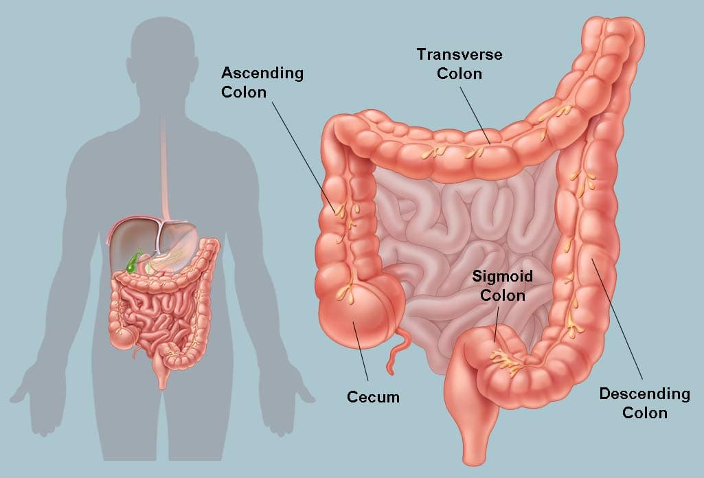 arizona colon hidroterapie u0026 detox spa recenzii hpv szemolcs lezeres eltavolitasa