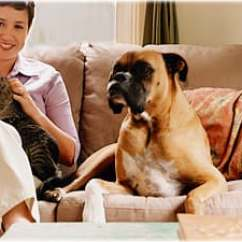 Clean Sofa With Baking Soda Wholesale Sectional Sofas Pet Quiz: Can You Have A And Home?