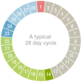 The average menstrual cycle is 28 to 32 days some women have longer