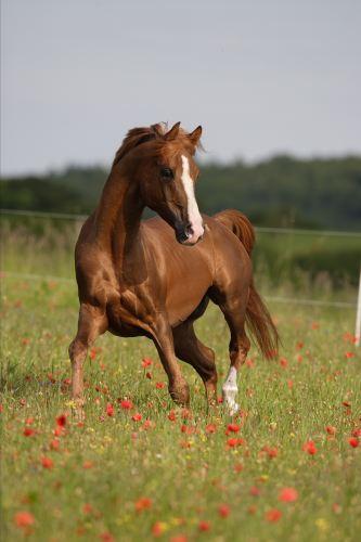 AnimalsLand  Zucht Pferde  Ponys