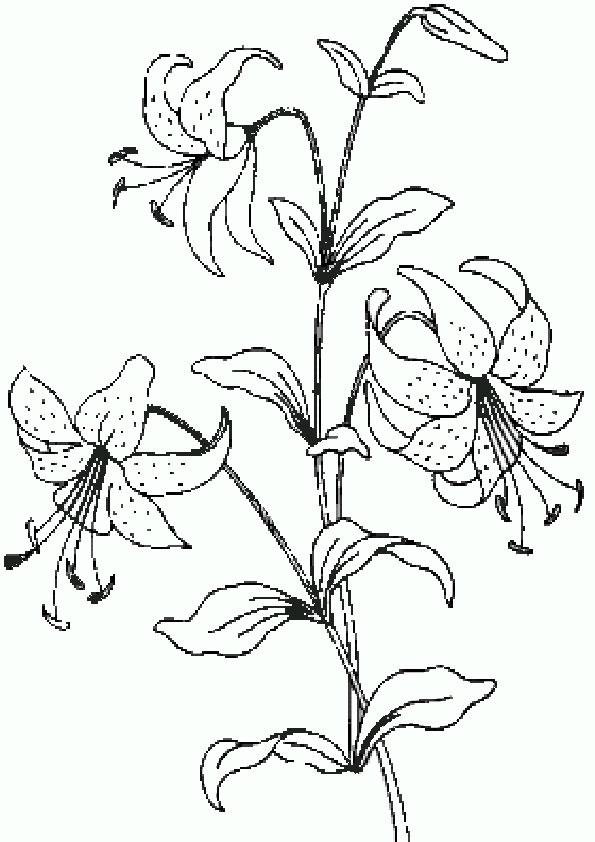 Dreamland Blumen