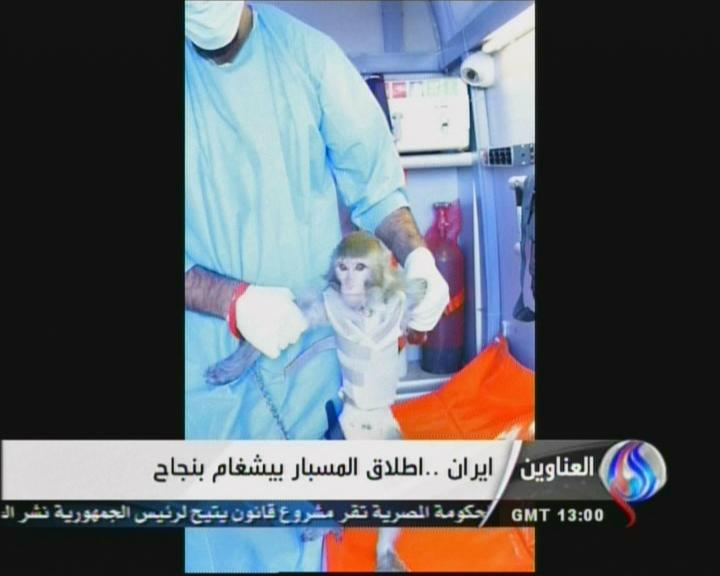 Ein Bild des iranischen Fernsehsenders Al-Alam TV vom 28. Januar 2013: Zu sehen ist angeblich Irans erster Affe im All