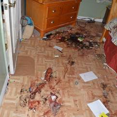 Garage Chairs Rolling Slip Covered Dining Room Tyler Hadley's Killer Party: The Shocking Florida House Party Murders - Stone