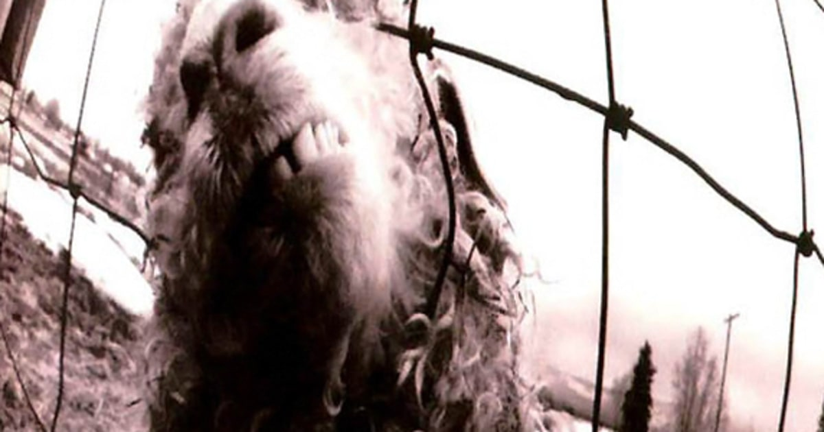 8 Pearl Jam  Vs  Readers Poll The Best Grunge Albums of All Time  Rolling Stone
