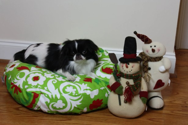 Holiday Dog Pillow/Classic Size: Small (24