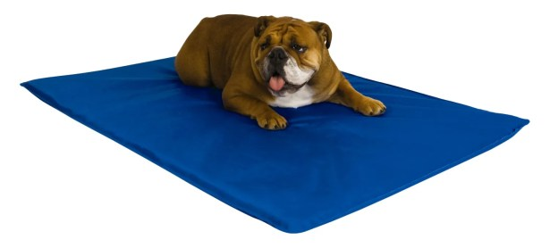 Valeria I Am Not A Robot Dog Bed Size: Medium (32