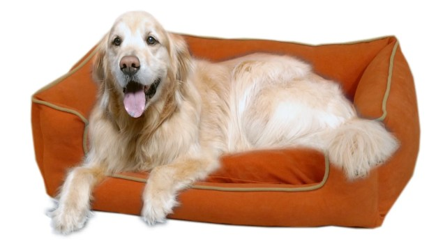Calypso Timothy Pet Bed Size: X-Small (26