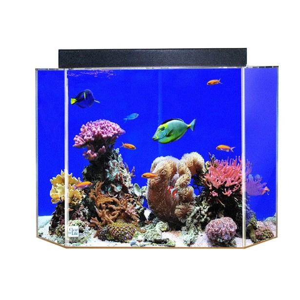 Aquarium Tank Color: Sapphire Blue Back, Size: 16