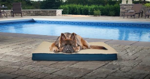 Etta Deluxe Outdoor Orthopedic Pet Mat/Pad Size: Jumbo (35
