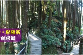 南投景點∥ 杉林溪 森呼吸 - 穿林棧道,柳杉環繞的舒服踏青步道
