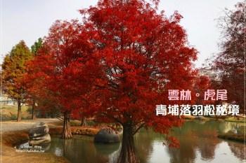 雲林景點∥ 虎尾青埔落羽松秘境森林 - 水池小丘搭染紅落羽松園區,免費景點