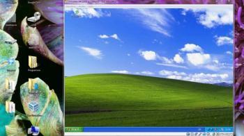 Windows XP starten