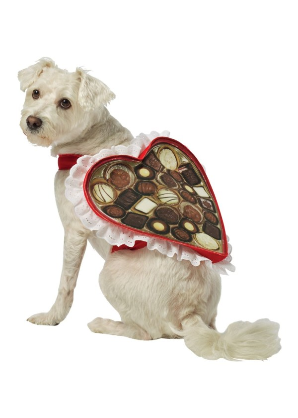 Heart Box of Chocolates Pet Costume Pet Costumes