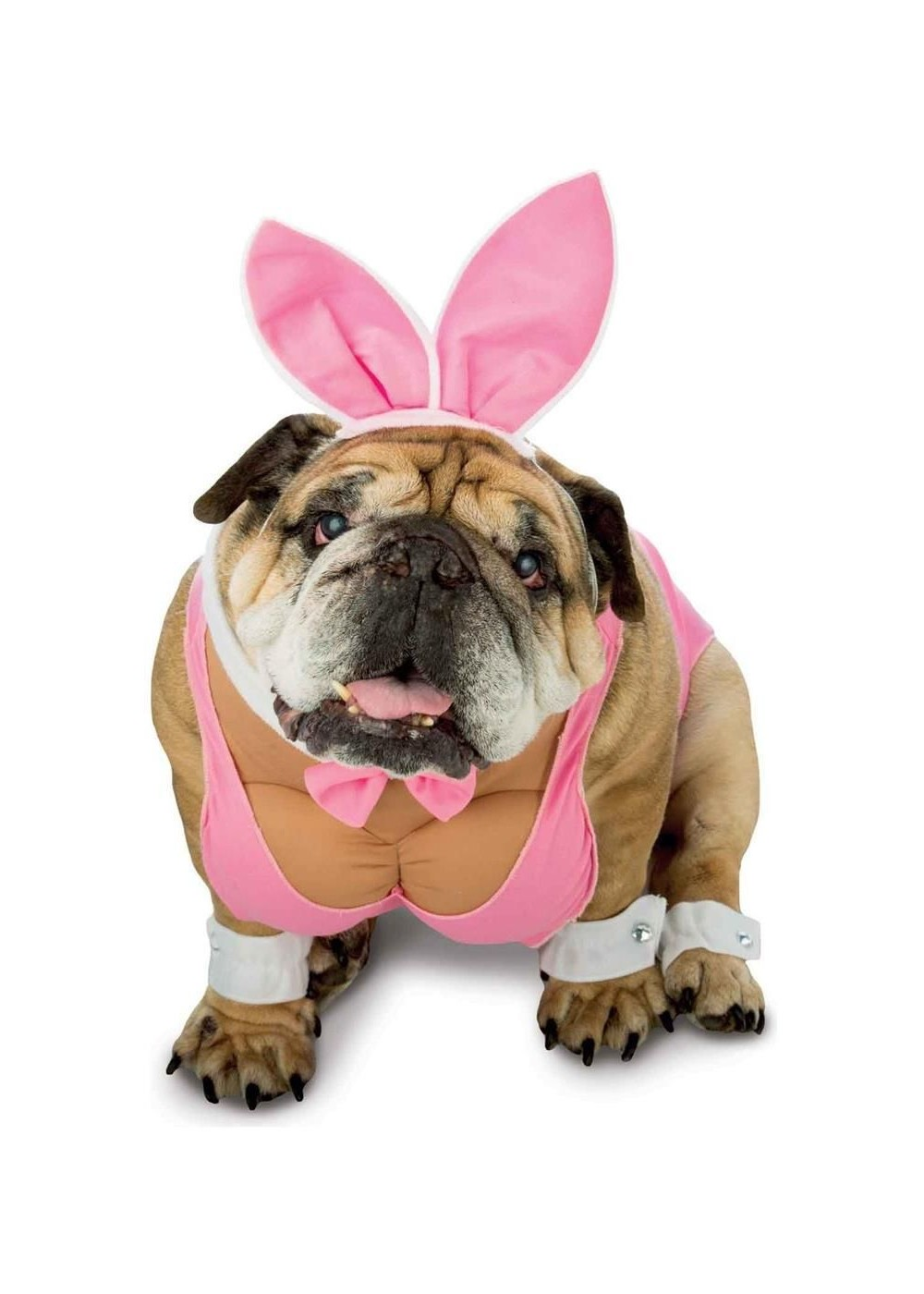 Cute Baby Princess Wallpapers Hunny Bunny Dog Costume Pet Costumes
