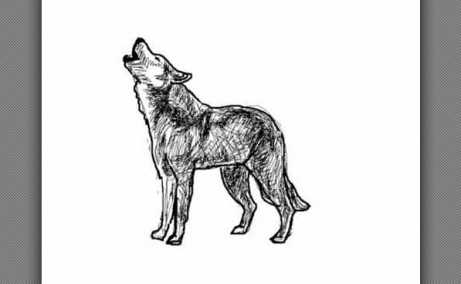 How To Draw A Wolf Lobo Howling At The Moon Drawing
