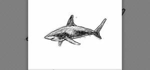 shark draw simple drawing tiburon wonderhowto illustration