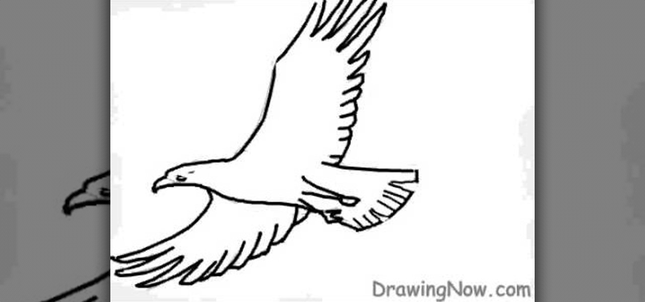 How to Draw a basic eagle « Drawing & Illustration
