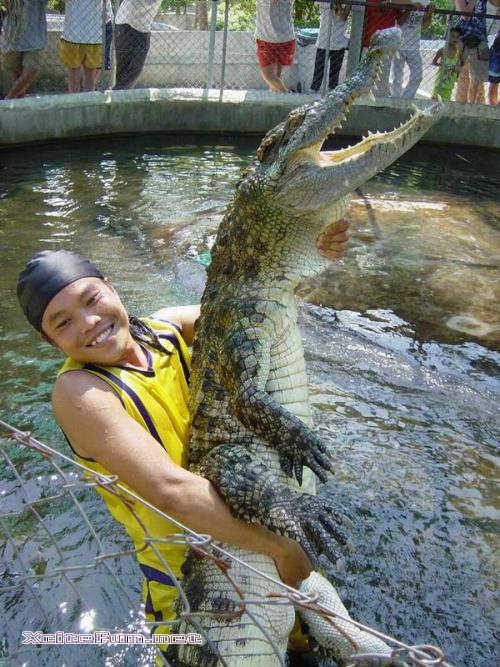 Cool N Cute Wallpapers Pet Crocodile Xcitefun Net