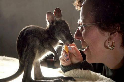 Very Cute Babies Wallpapers For Desktop Joey A Baby Kangaroo Hopping Animal Xcitefun Net