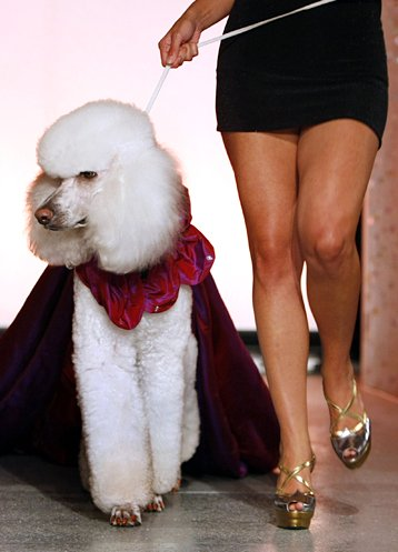 Cute N Lovely Wallpapers Dog Fashion Show Xcitefun Net