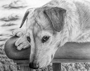 animals drawings animal drawing realistic pencil dog sketches dibujos portrait animales xcitefun cool draw sketch realistas profesionales lapiz yorkie portraits