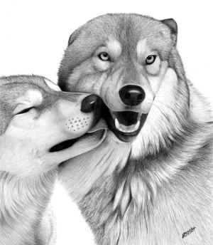 realistic animal drawings drawing xcitefun animals sketches cool sketch pencil dog