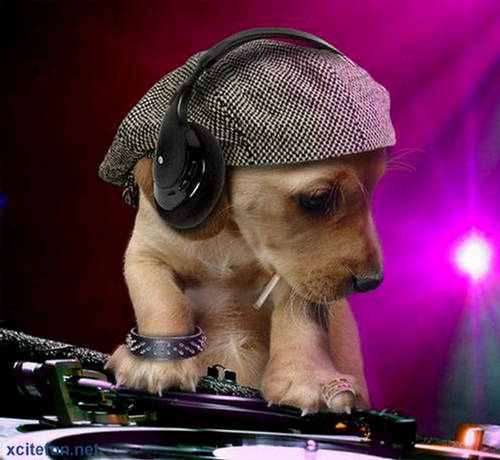 Animal Computer Wallpaper Dj Dog The Barking Beats Xcitefun Net