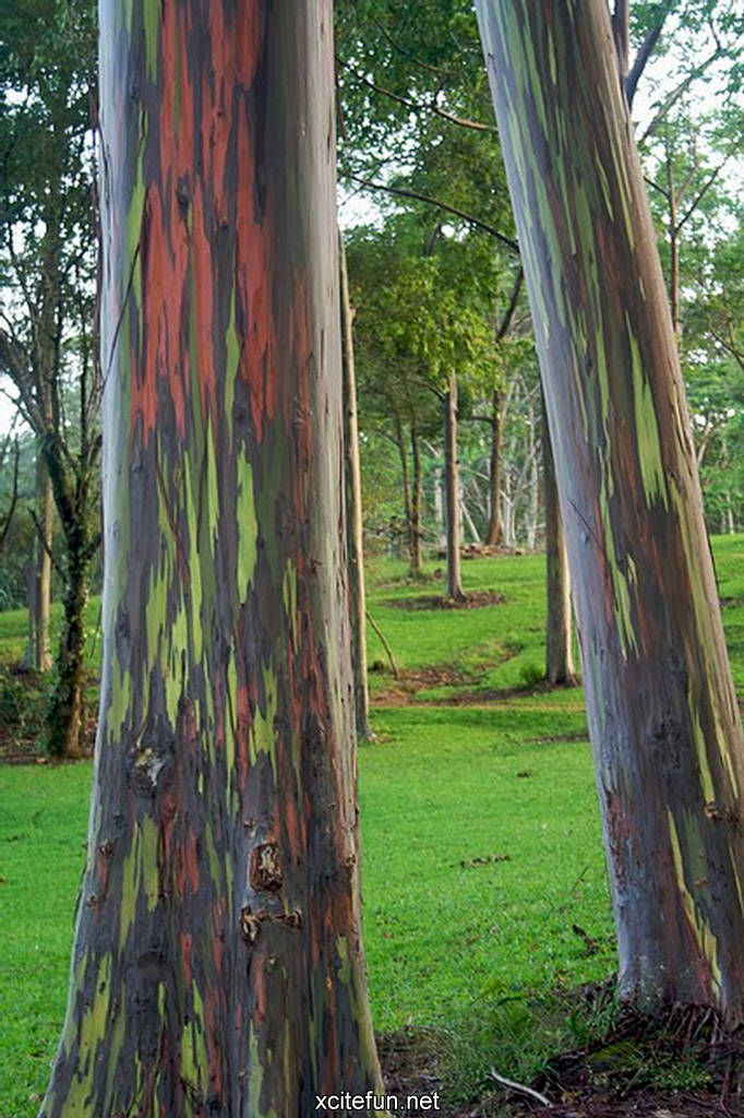 Cute Wallpapers For My Phone Nature Painted Tree Rainbow Eucalyptus Xcitefun Net