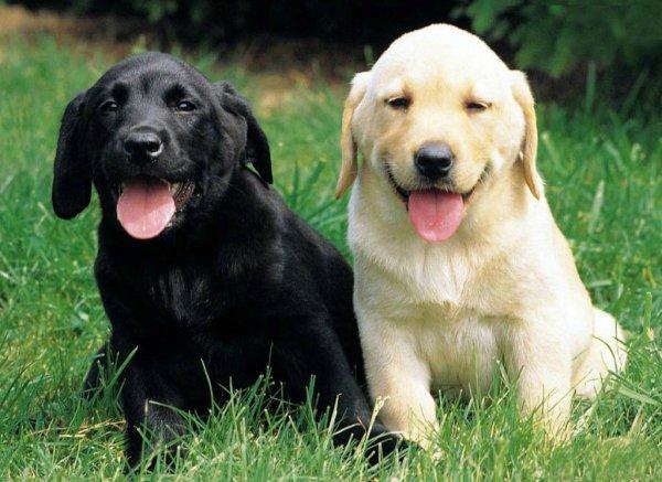Most Beautiful Small Dogs
