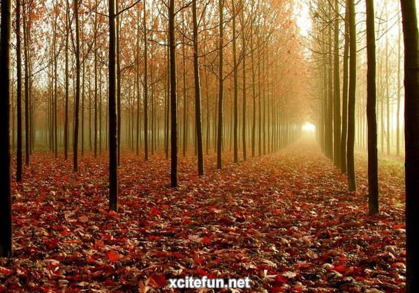 Fall Season Computer Wallpaper End Of Autumn Yellow Season Xcitefun Net