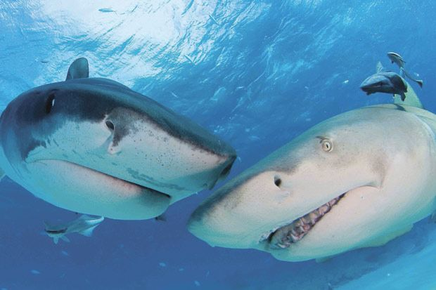 Inspirational Love Quotes Wallpapers Sharks Close Up Pictures Xcitefun Net