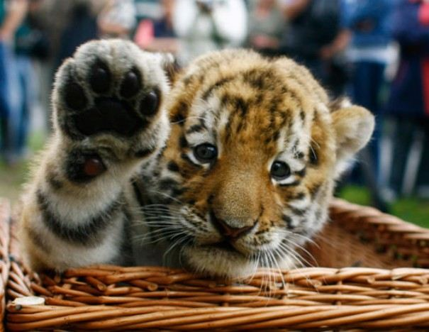 Very Cute Babies Wallpapers For Desktop Awesome Baby Animals Xcitefun Net
