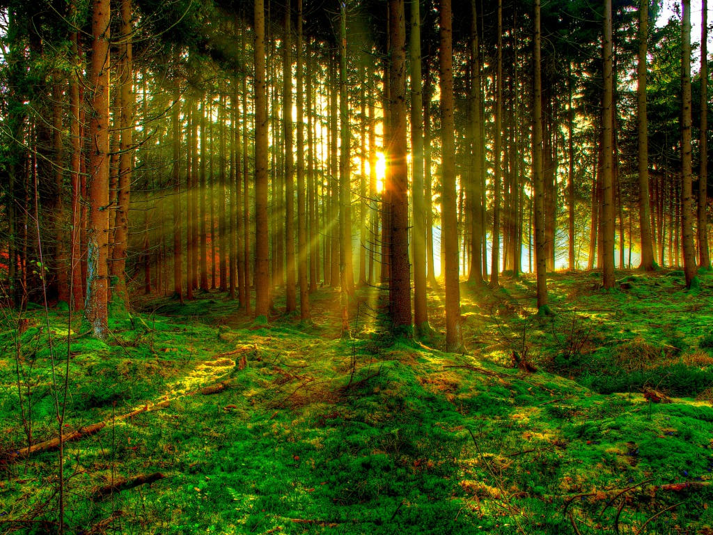 Cute Babies Hd Wallpapers 1366x768 Sun Beam Forest In Russia Xcitefun Net