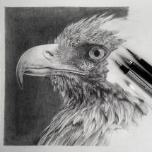 fabulous pencil drawings