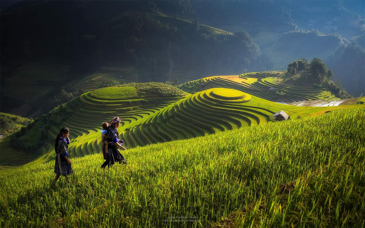 Bollywood Wallpapers With Love Quotes Awesome Field Work In Vietnam Xcitefun Net