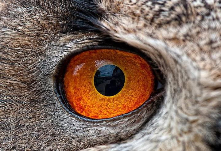Funny And Cute Wallpapers With Quotes Closeup Of Animal Eyes Xcitefun Net